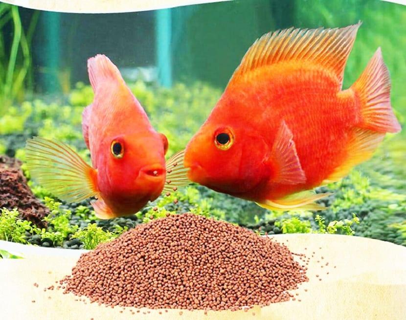 Comida para peces Goldfish