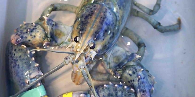 Pinzas de crustaceos
