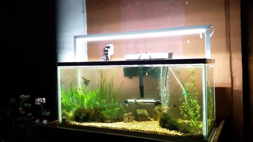 Lámparas de acuario