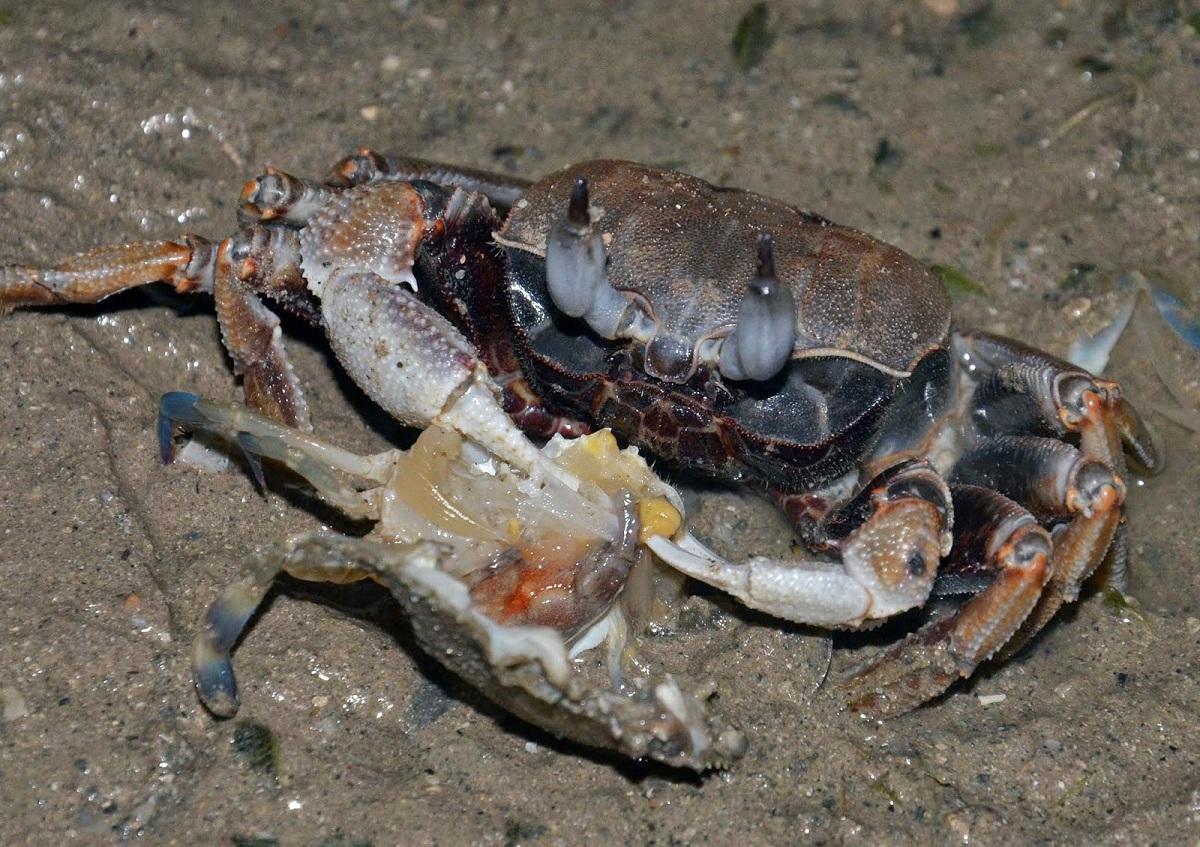 Tipos de cangrejos