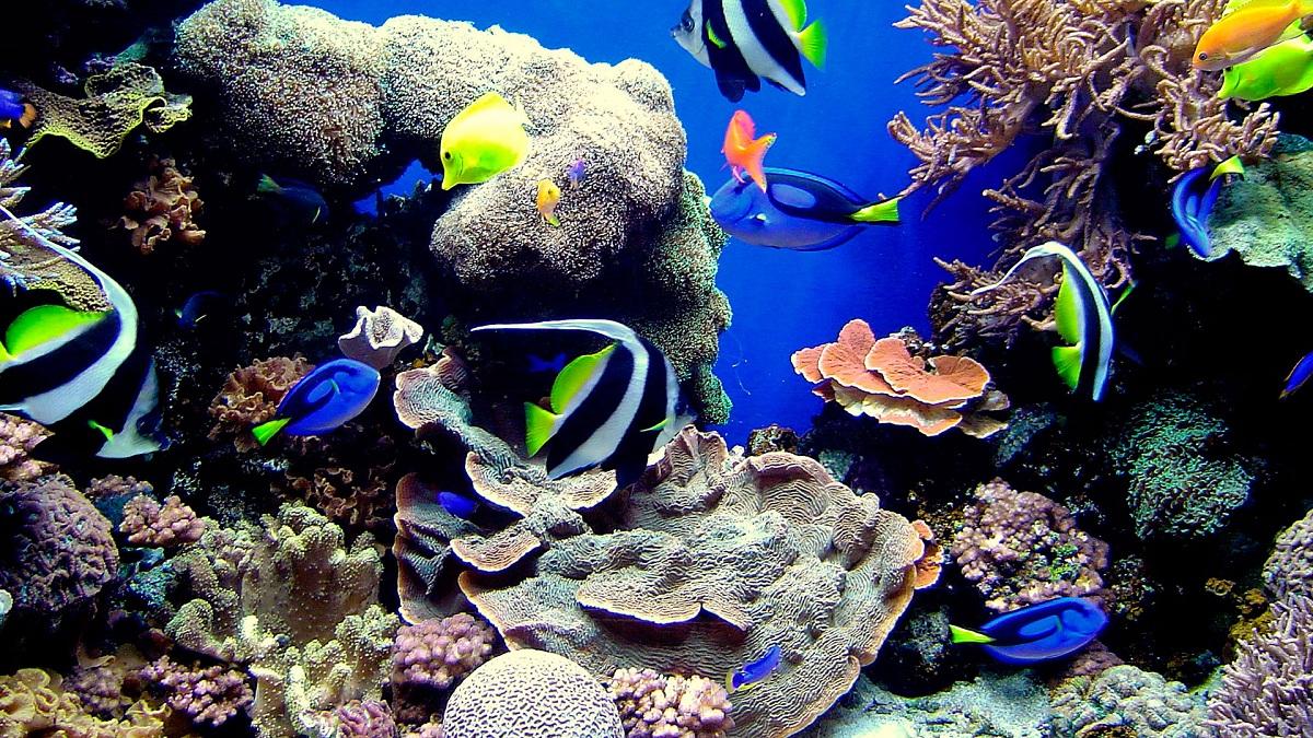 Animales de acuarios marinos