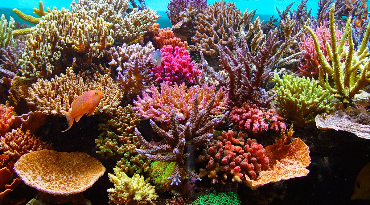 Características del agua marina