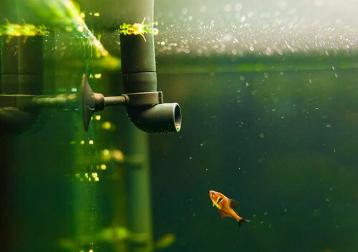 Mantenimiento de filtros de acuario