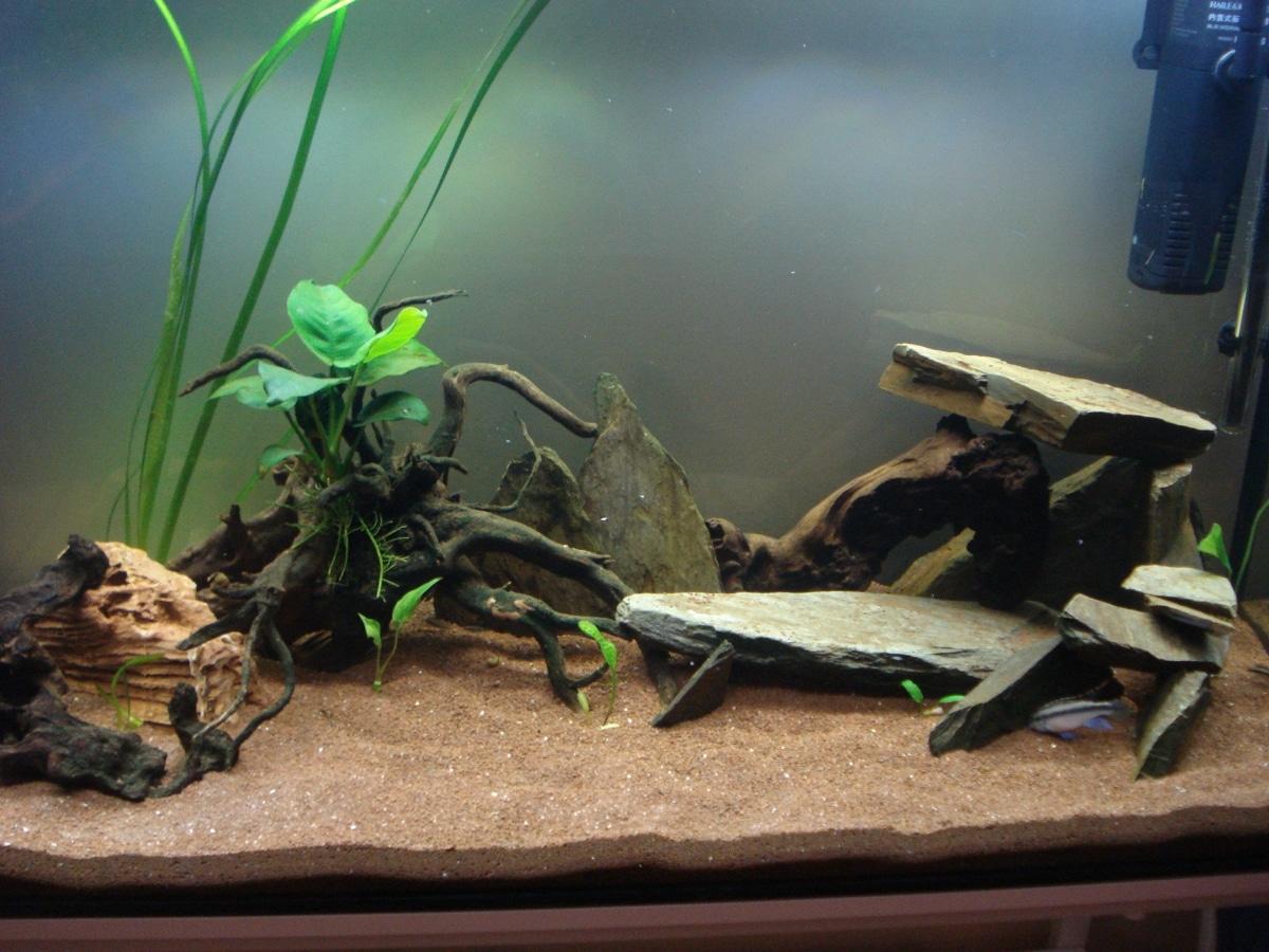 Tipos de sustratos para acuarios