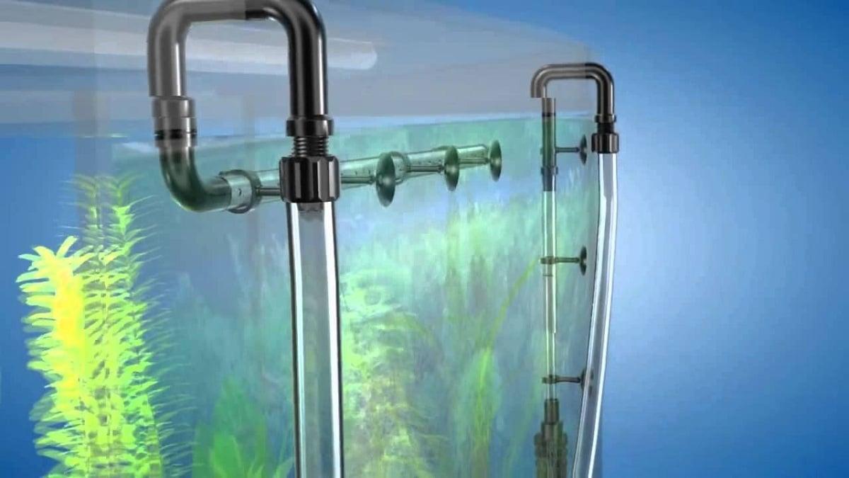 acuario externo