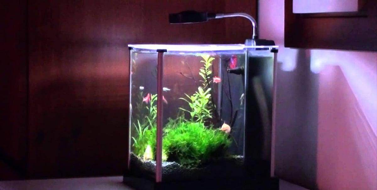 acuarios pequeños para decorar