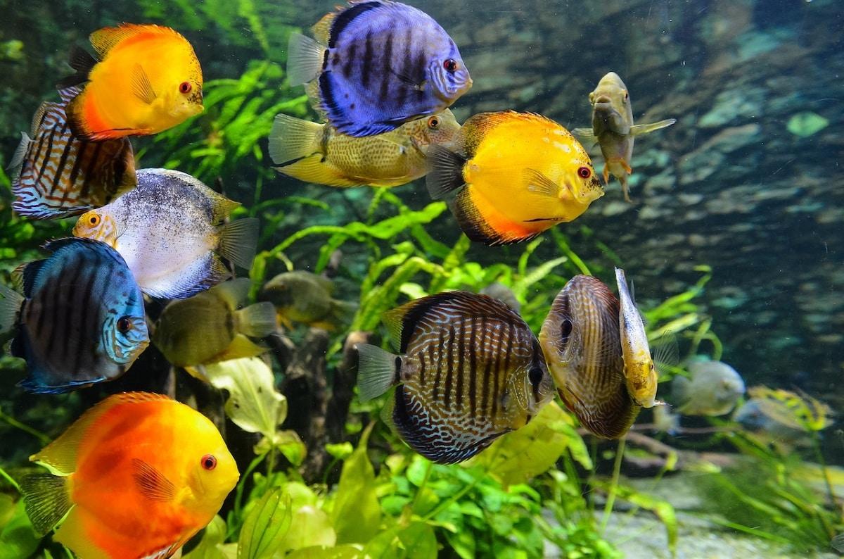 estudios de comunicación de peces