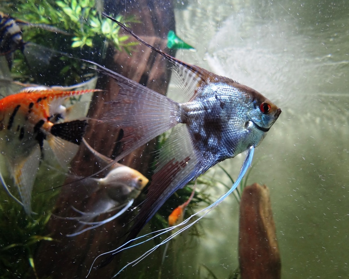 acuario con peces