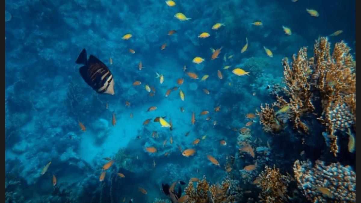 Estudios de cómo afecta la música a los peces