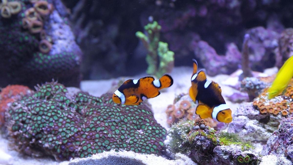 Razones por las que mueren los peces en el acuario