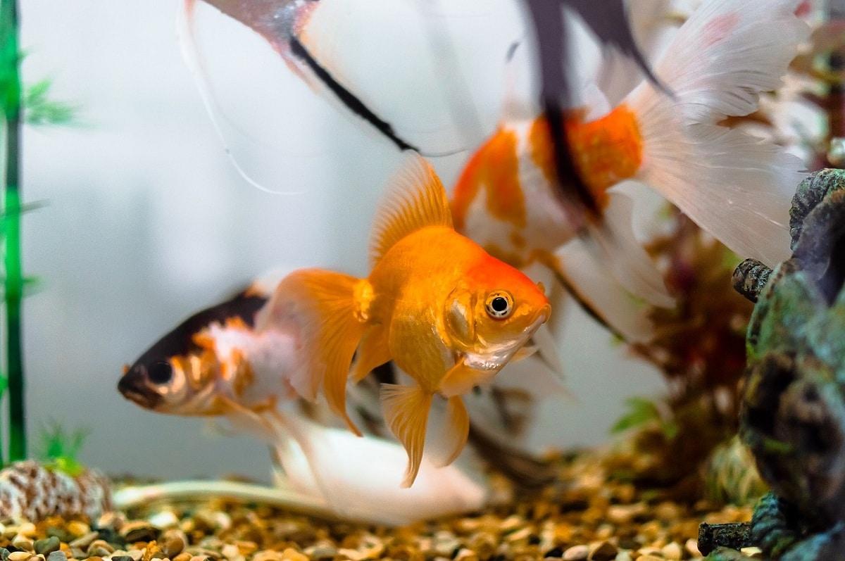 Razones por las que mueren los peces