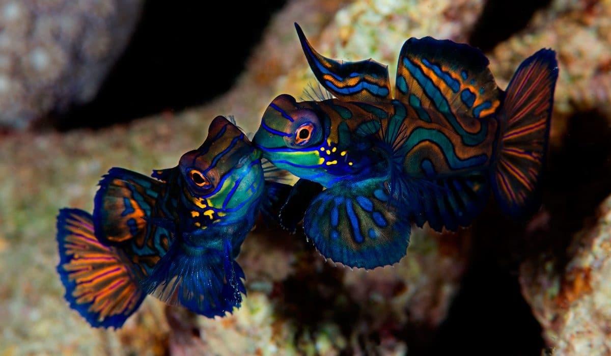 Tipos de apareamiento de peces en el acuario