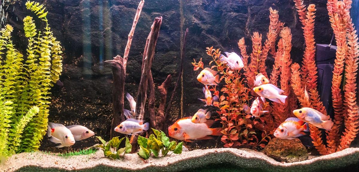 necesidad de oxigeno en peces