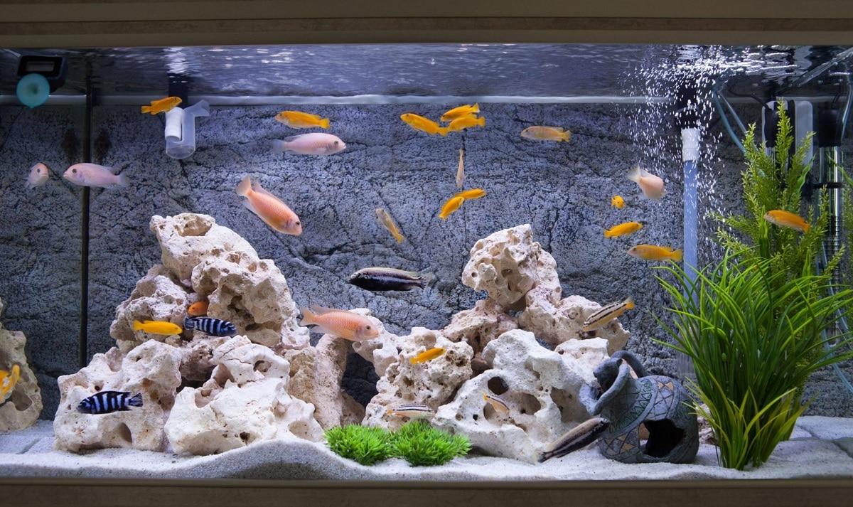 decoracion y peces