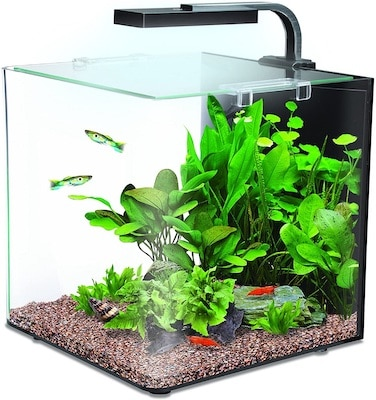 peces nano acuario
