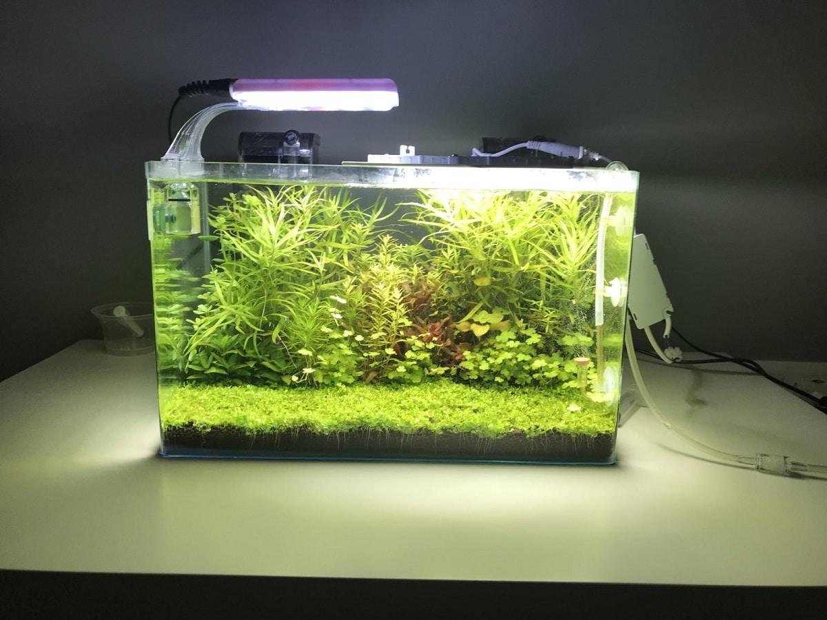 plantas para nano acuario