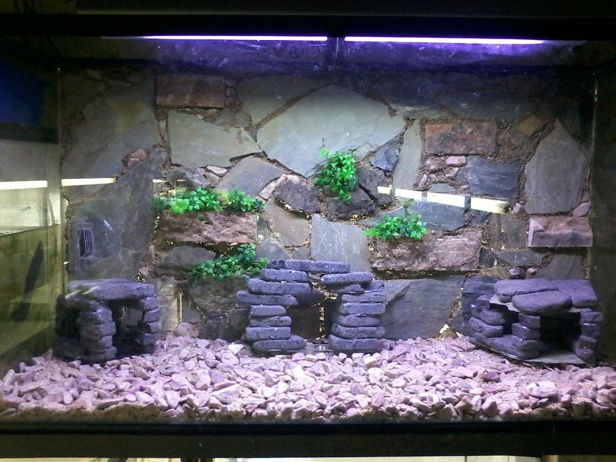 piedras para acuarios