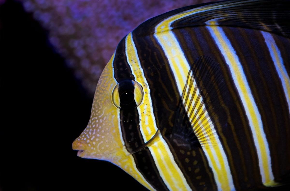 Un pez nadando por un acuario