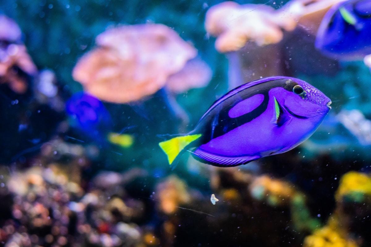 Un pez nadando tras el cristal