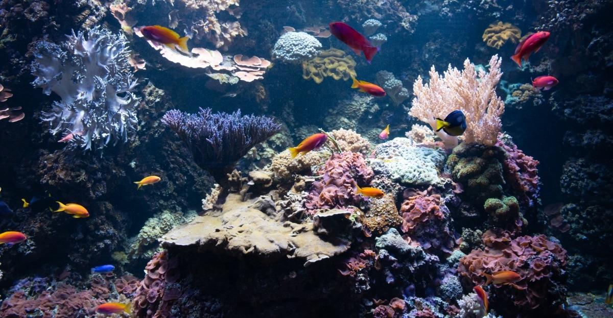 Los acuarios plantados necesitan combinar agua de osmosis y del grifo