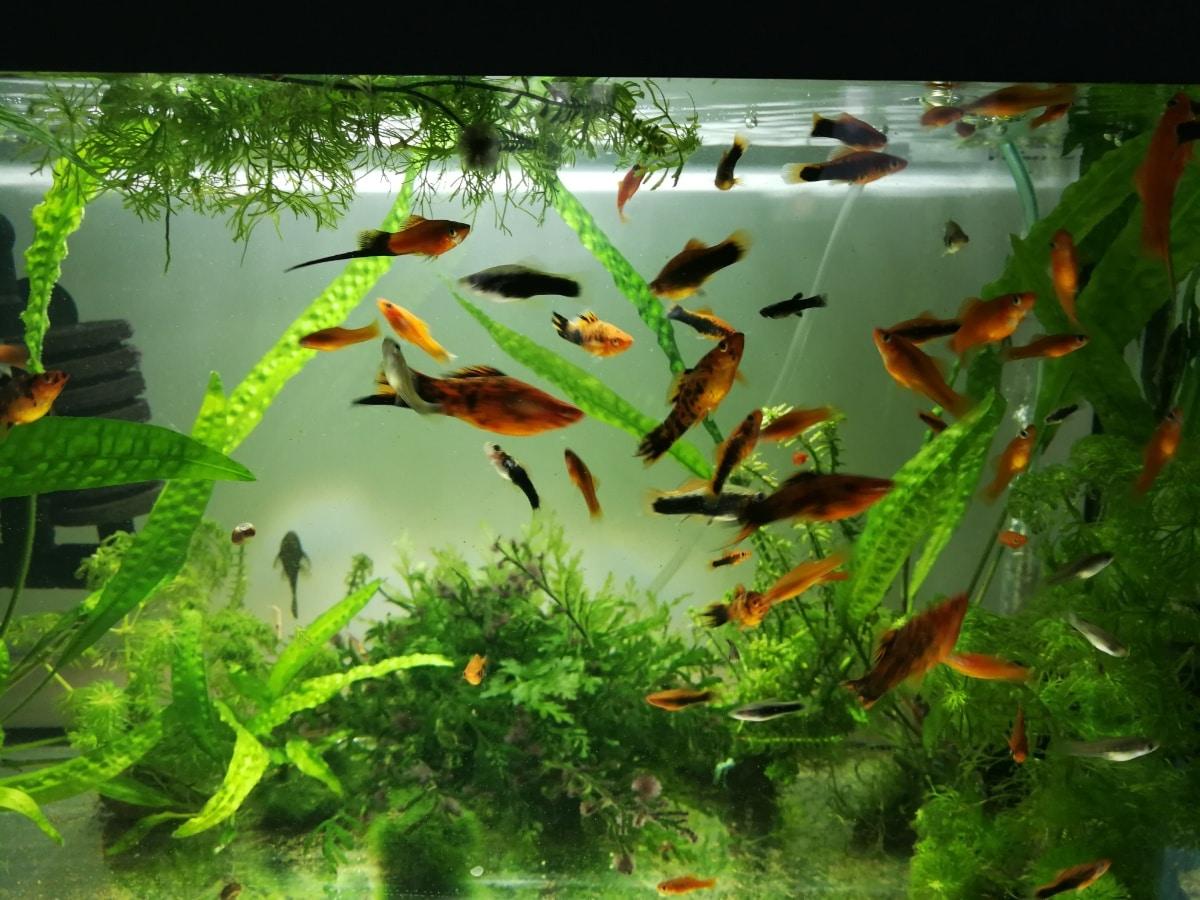 Un acuario grande con muchos peces