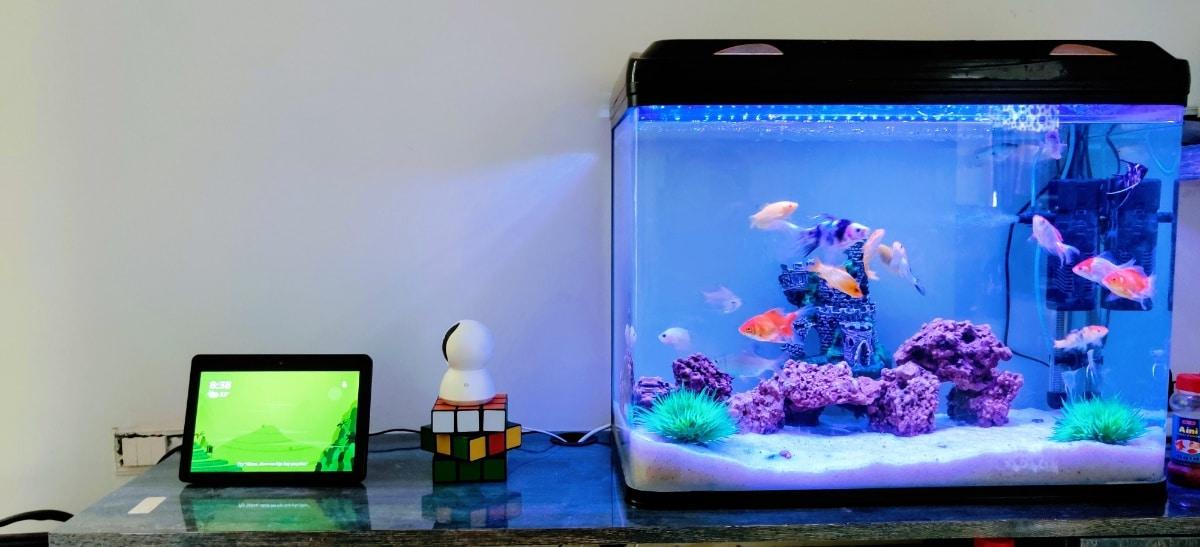 Un acuario pequeño es más barato