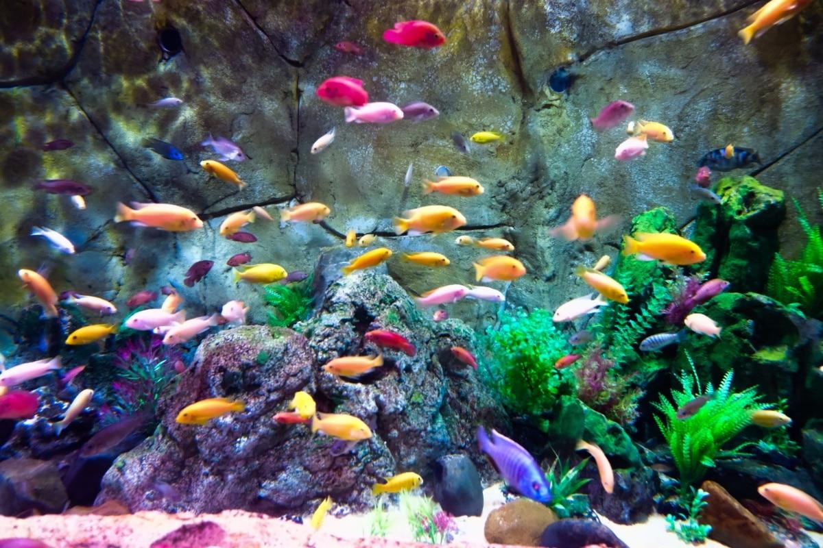 Un montón de peces en un acuario