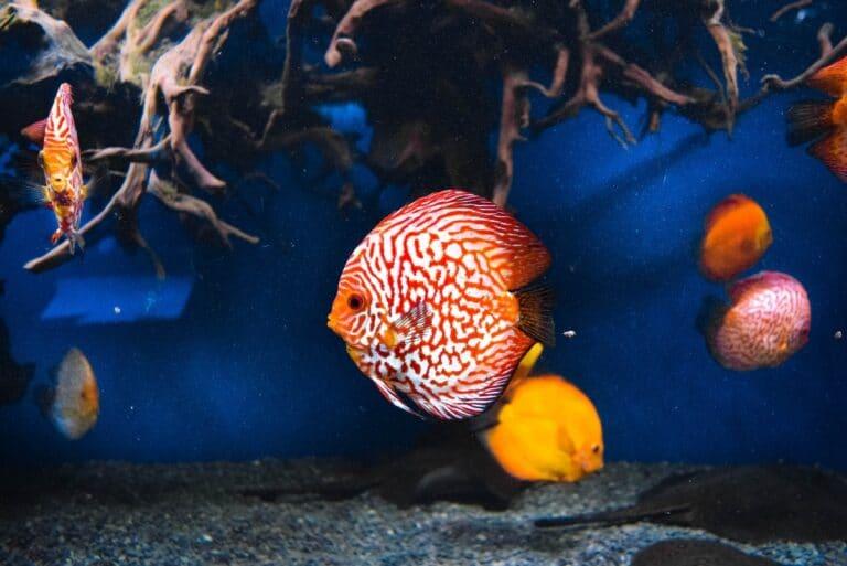 Los peces necesitan un agua limpia para vivir