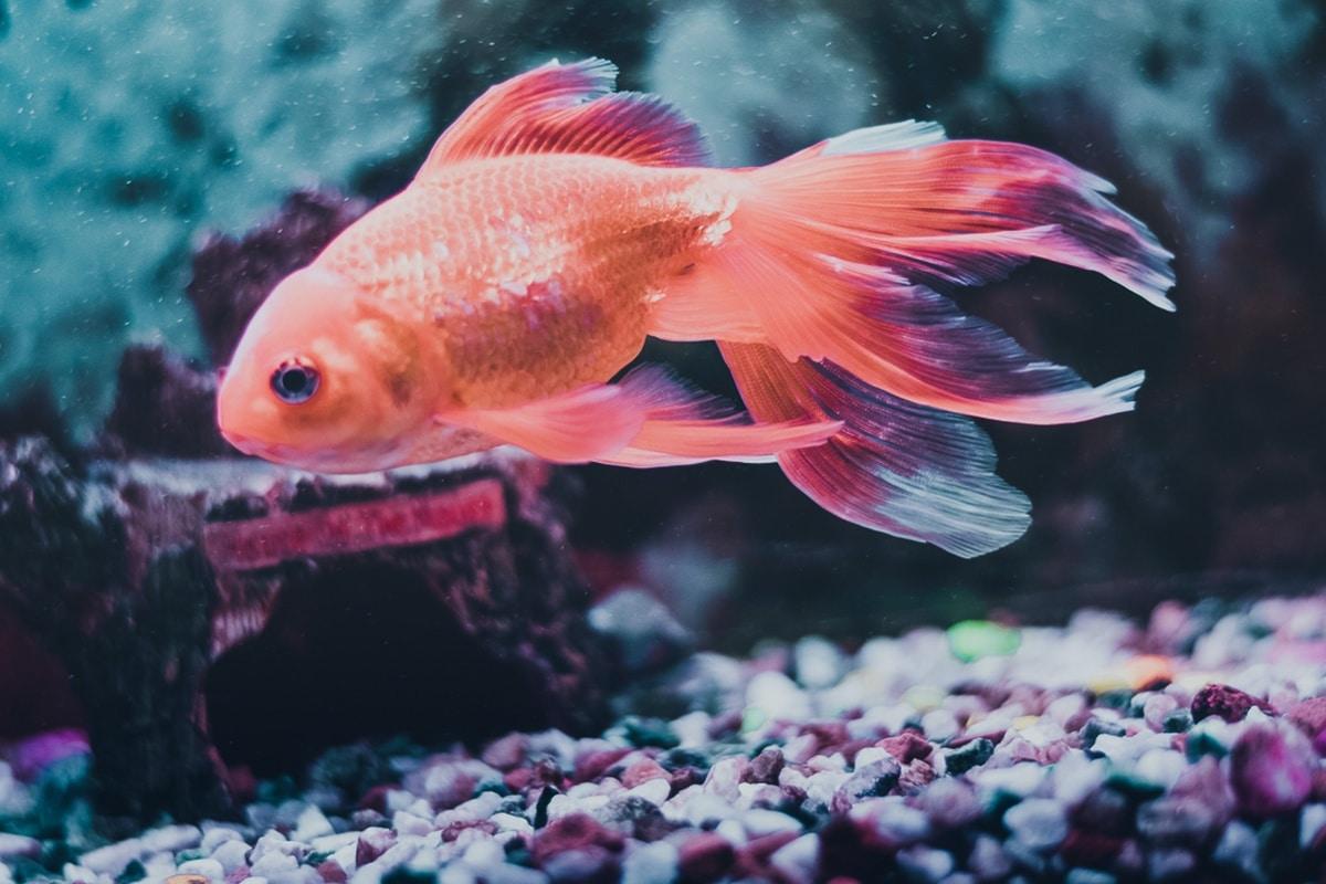 El acuario se mantiene limpio gracias al filtrado