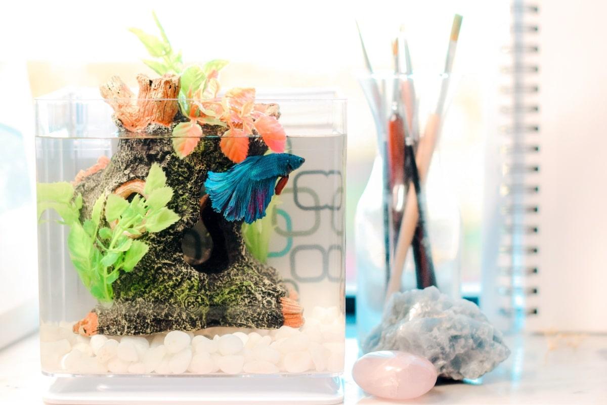 Una pecera con plantas artificiales
