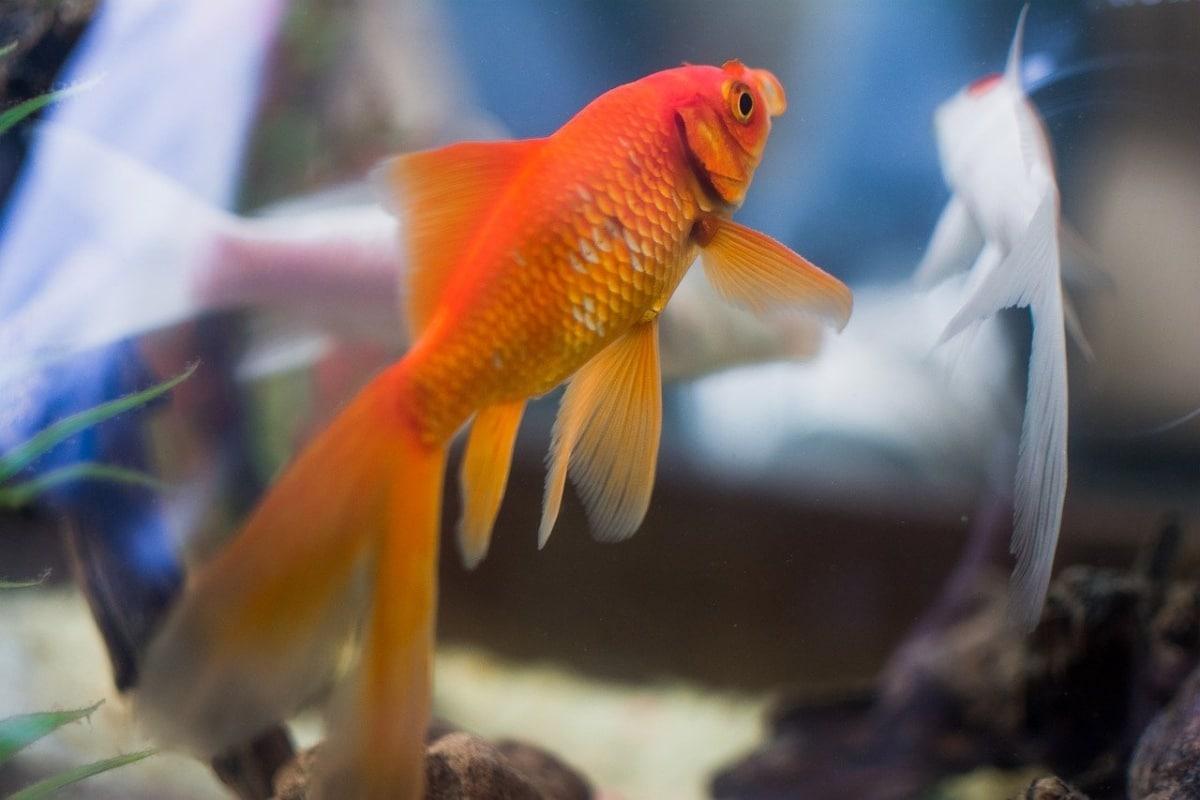 Es importante escojer una silicona que no sea perjudicial para los peces