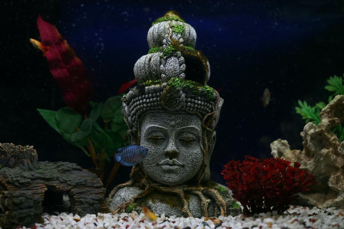 Fihgura como decoración para un acuario