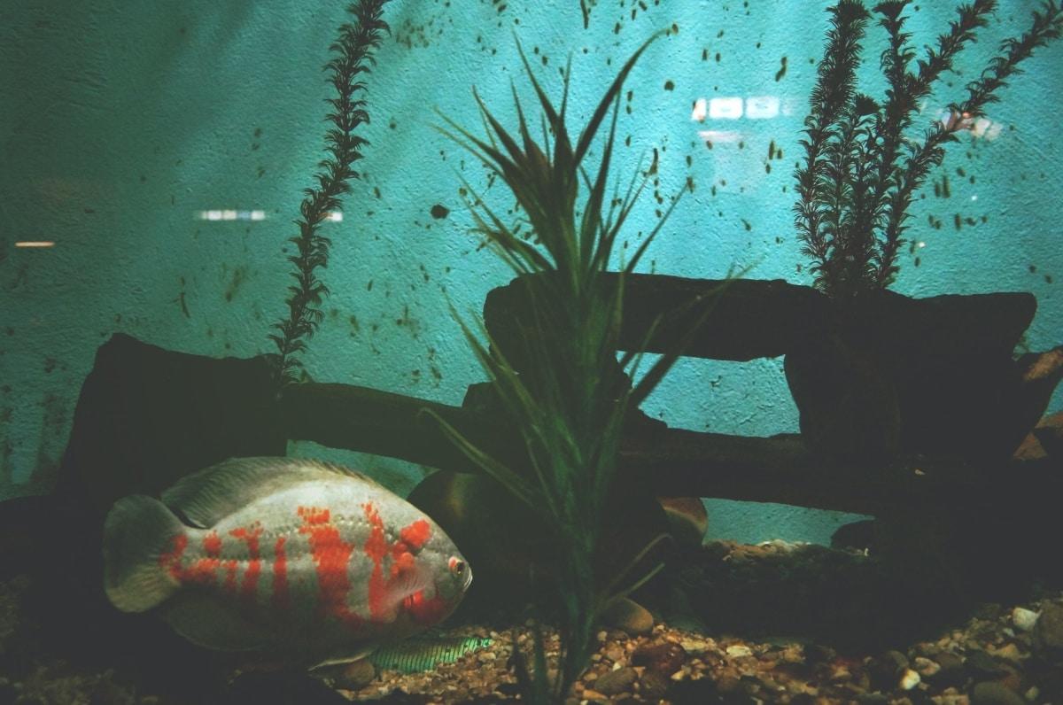 Mejor que no tengas peces a la hora de hacer pruebas con los niveles de CO2