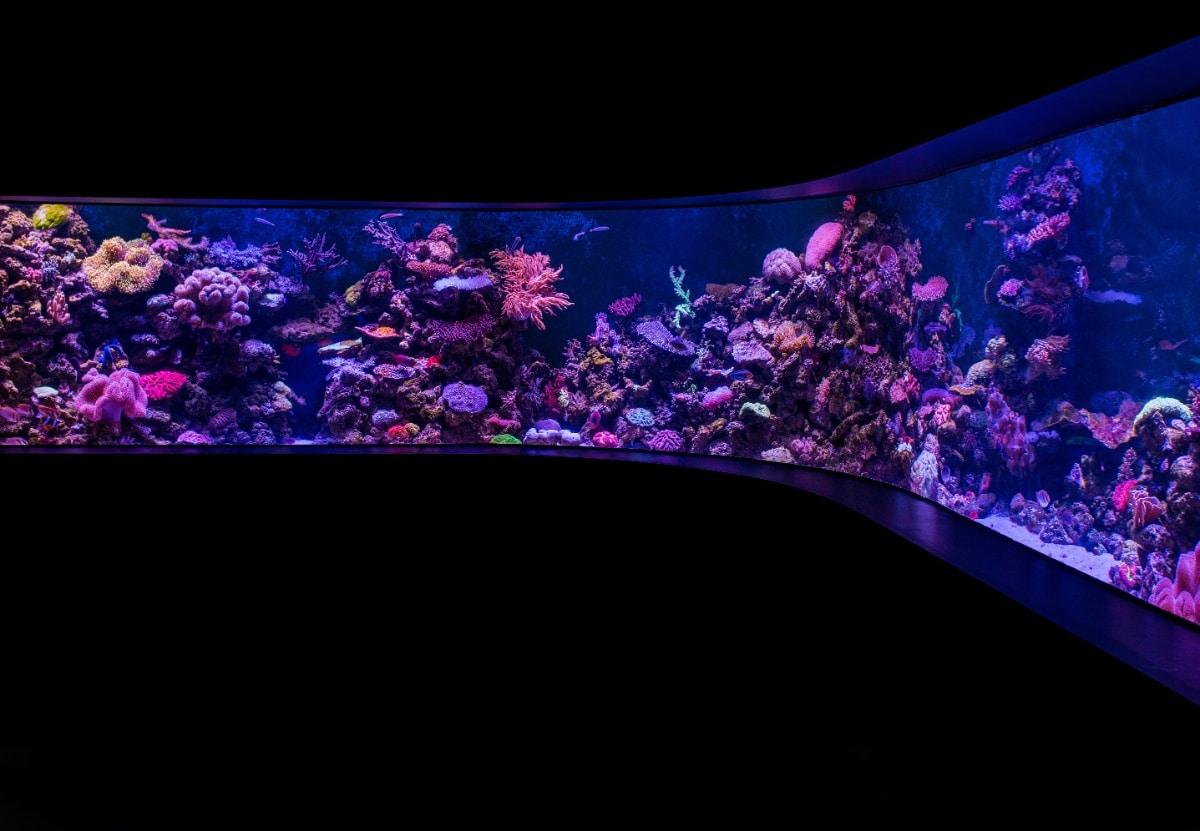 Un gran acuario