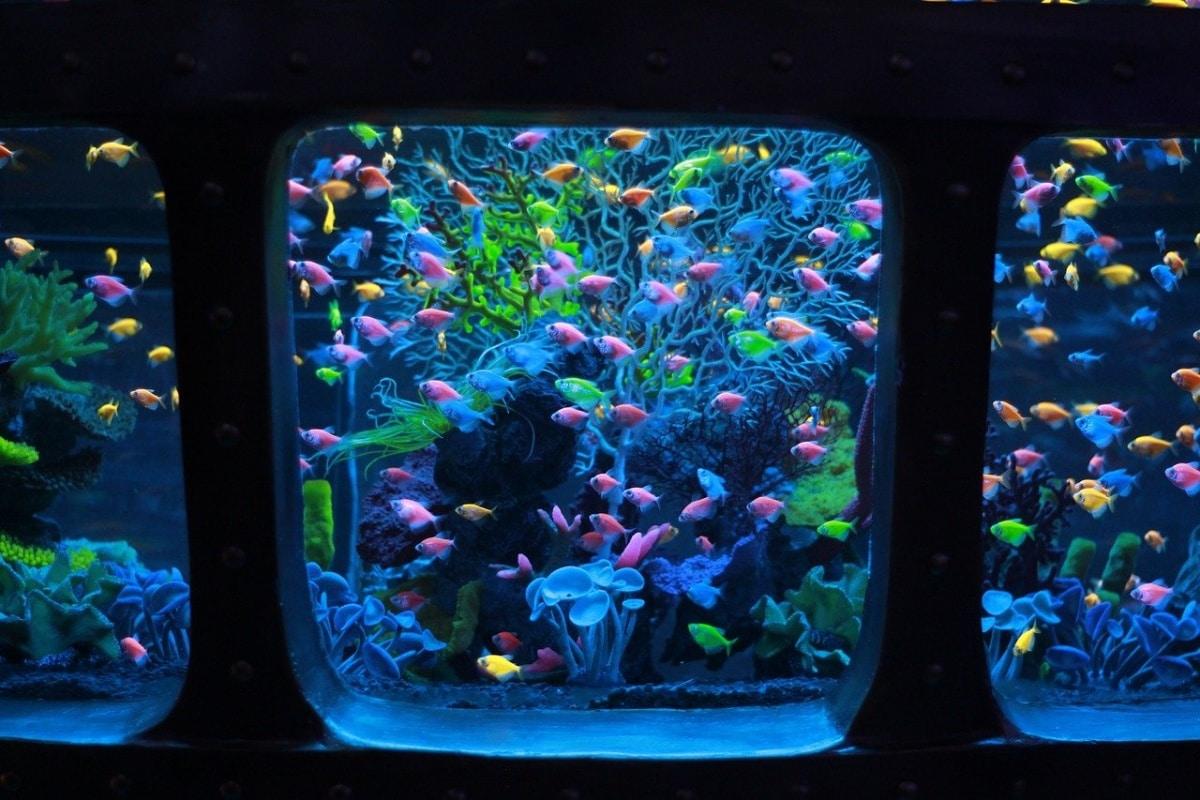 Un gran acuario necesita un filtro potente