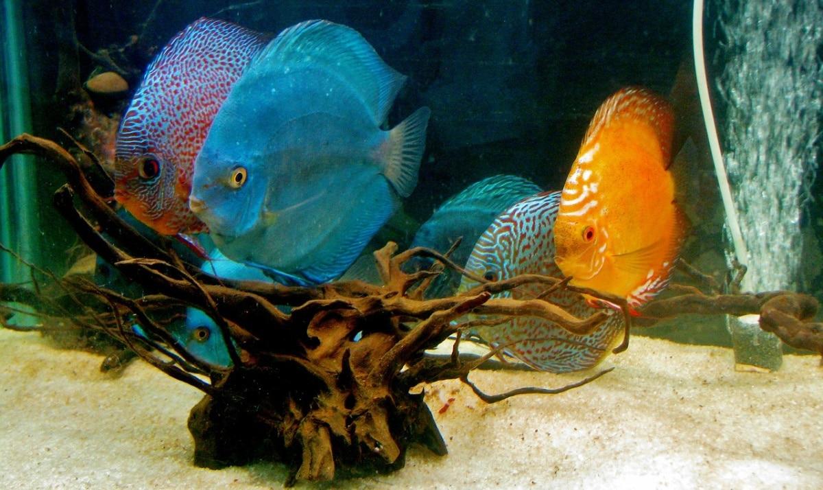 Peces en el fondo de un acuario