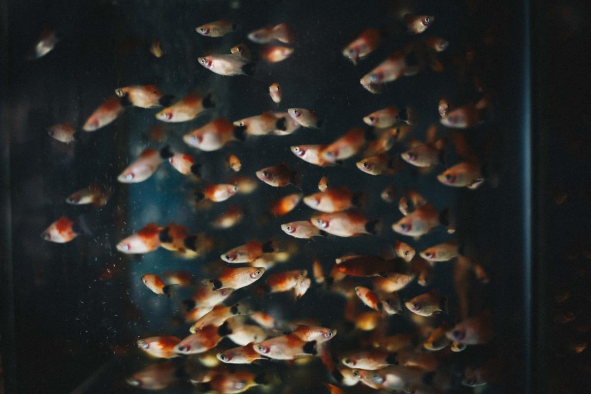 Un montón de peces nadando en un acuario