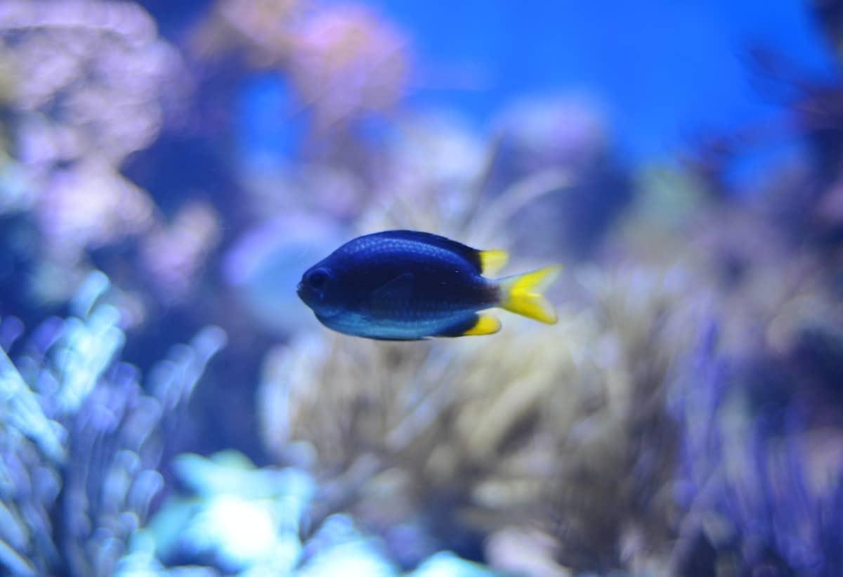 Un pez en un acuario de agua salada