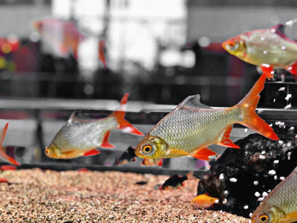 Un pez nadando en agua cristalina