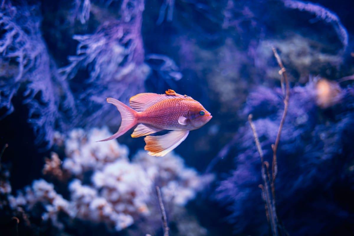 Los peces necesitan un agua limpísima para vivir